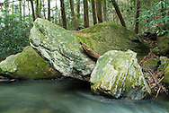 The Middle Saluda was South Carolina's first designated wild and scenic river. It is important to a variety of plant and wildlife. Its entire length has been protected thanks to the conservation efforts of Greenville attorney, photographer and conservationist, Thomas Wyche
