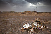 I've been uploading a lot of images lately celebrating the beauty of life. Here's one celebrating the beauty of death.<br /> <br /> Siwa, Egypt. On the edges of the Sahara Desert.