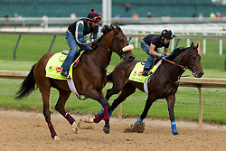 Derby 142 hopefuls Mo Tom, right with Mario Garcia up and Suddenbreakingnews with Ramiro Gorostieta up were on the track for training, Tuesday, May 03, 2016 at Churchill Downs in Louisville.