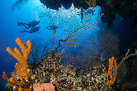 Divers cruise off of a sheer Reef Wall<br /> Shot in Cayman Islands