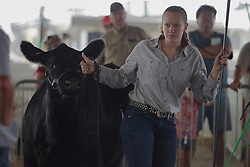 03 August 2017:  A young girl shows an angus cow 2017 McLean County Fair<br /> <br /> #alphoto513