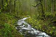 Gorton Creek, Columbia River Gorge National Scenic Arae, Oregon