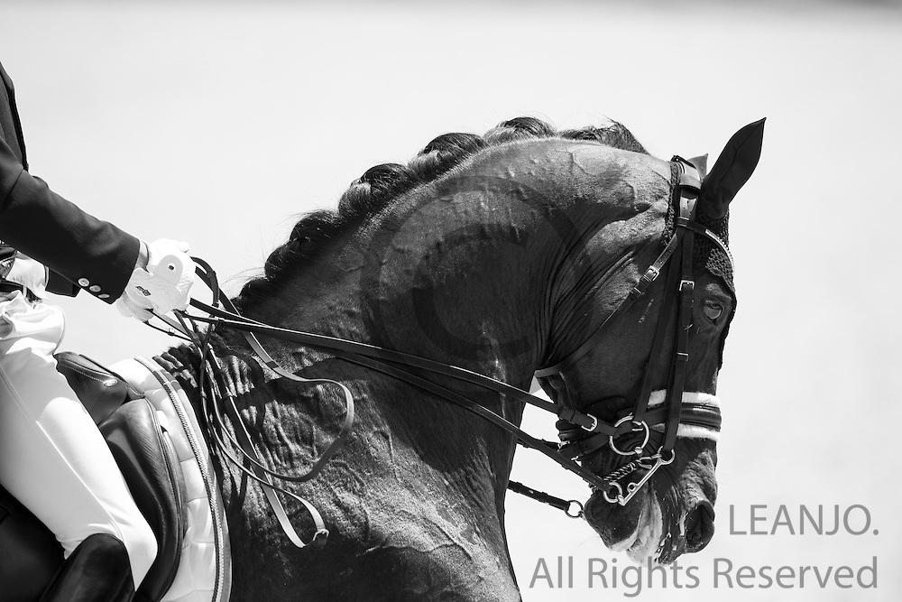 Thomas Wagner - Amoricello<br /> World Equestrian Festival, CHIO Aachen 2015<br /> &copy; DigiShots