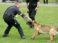Middletown, New York - A police officer and a police dog perform during a demonstration at the festival following the 15th annual Ruthie Dino Marshall 5K Run and Fun Walk hosted by the Middletown YMCA on Sunday, June 5, 2011.