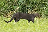 Colombia mammals