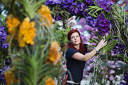 © Licensed to London News Pictures. 07/02/2012. London, England. Pictured: Elisa Biondi, horticulturalist. The annual Orchid Festival opens on Saturday, 9 February in the Princess of Wales Conservatory at Kew Gardens, London. Horticulturalists set up floral displays. The festival runs to 3 March 2013. Photo credit: Bettina Strenske/LNP