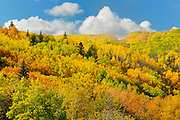 Colorful autumn foliage in hills <br /> Grande Prairie <br /> Alberta<br /> Canada