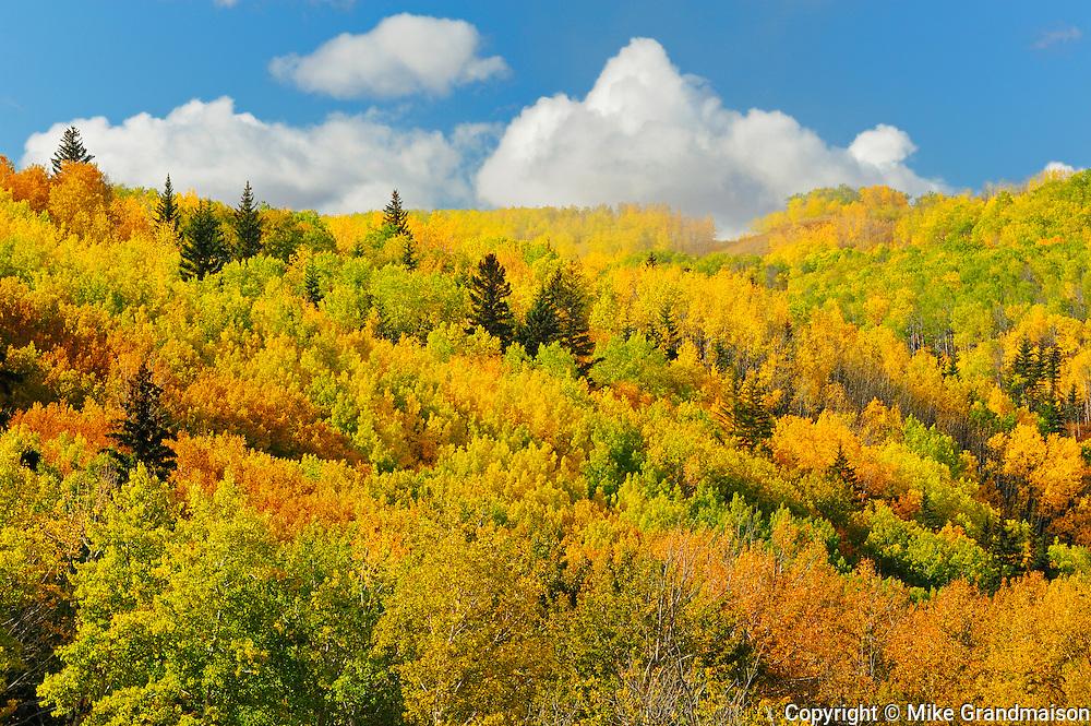 Colorful autumn foliage in hills <br /> Grande Prairie <br /> Alberta<br /> Canada