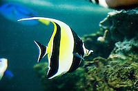 fish at The New Jersey State Aquarium