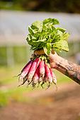 2018 Side Yard Farm Harvest