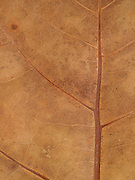 close up of a dried leaf