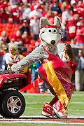 KANSAS CITY, MO - SEPTEMBER 26:   K.C. Wolf of the Kansas City Chiefs performs to the crowd before a game against the San Francisco 49ers at Arrowhead Stadium on September 26, 2010 in Kansas City, Missouri.  The Chiefs defeated the 49ers 31-10.  (Photo by Wesley Hitt/Getty Images) *** Local Caption ***