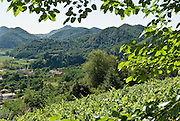 Italien, Euganeische Hügel bei Padua, Landschaft mit bewaldeten Hügeln .. ..Italy, Colli Euganei, landscape with wooded hills