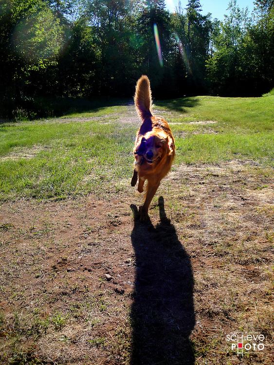 Dog fetching sticks.