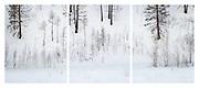 A musical score, written in trees.