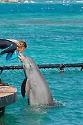 Common Bottlenose Dolphin (Tursiops truncatus) Oceanarium, San Martin de Pajarales island, Rosario islands, Cartagena de Indias, Colombia, South America.