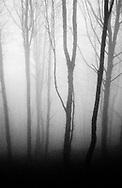 Basque forest. (Ander Gillenea / Bostok Photo)