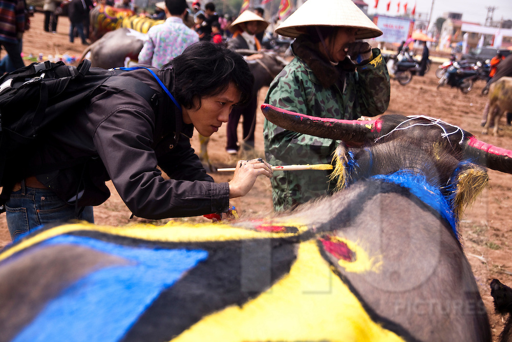 An artist paints a water buffalo at the Buffalo Painting Festival near Phu Ly, Vietnam.