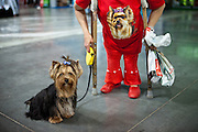 A woman with crutches getting a portrait with her Yorkshire Terrier during the Prague Expo Dog Exhibition.