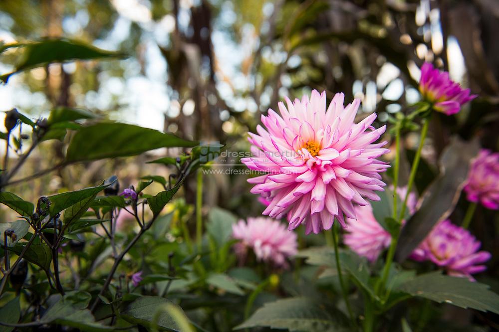AAS garden