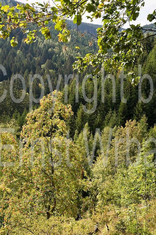 Wald, Steinerne Renne, Harz, Sachsen-Anhalt, Deutschland | forest, Steinerne Renne, Harz, Saxony-Anhalt, Germany