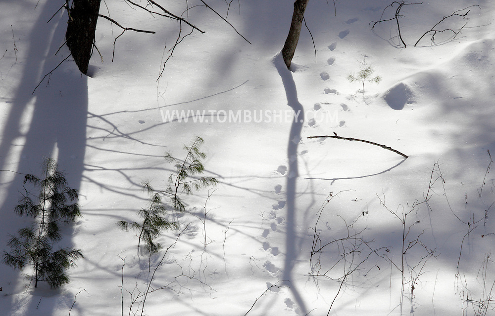 Cuddebackville, New York - Animal tracks and tree shadows on the forest floor at the D&H Canal  Park  on Jan. 22, 2011.