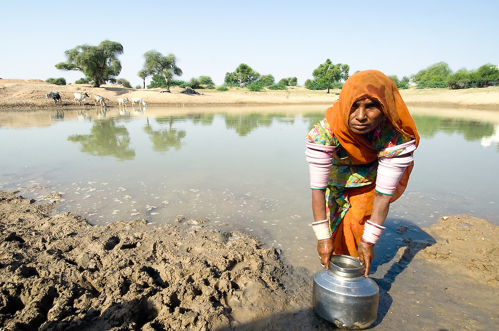 """In the Rajasthan region of India's Thar Desert, the """"panahari"""" (women who fetch water) is mainly responsible for fetching water from the village pond or waterwell Jodhpur, India)"""