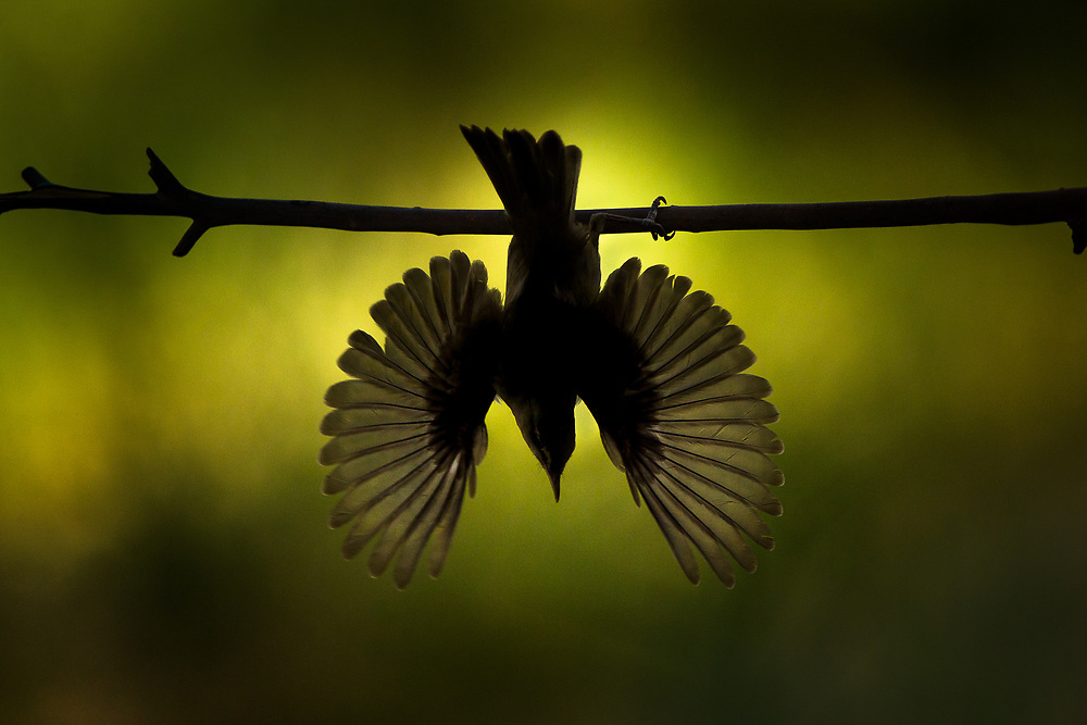 bird with two wings which gives absolute freedom to go anywhere, whether to migrate or to eat or to drink<br />