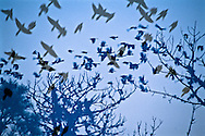 Birds in flight and branches