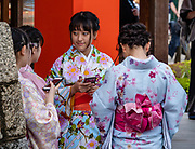 "Young women in kimonos check their smartphones in Kyoto, Japan. Fushimi Inari Taisha is an important Shinto shrine in southern Kyoto, Japan. Bright vermilion Senbon Torii (""thousands of torii gates"") straddle a network of trails behind its main buildings. The trails lead into the wooded forest of the sacred Mount Inari (233 meters). Fushimi Inari is the most important of several thousands of shrines dedicated to Inari, the Shinto god of rice. Foxes are thought to be Inari's messengers, honored in many statues. The shrine predates the capital's move to Kyoto in 794. The torii gates are donated by individuals and companies, as inscribed on the back of each gate. Prices for small to large gates run from 400,000 to over one million yen."