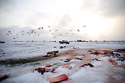 A sparse group of crew and community members quietly continue butchering the three whales caught on the first successful day of the fall whaling season in Barrow, AK in the early morning of September 23, 2014. Blubber and meat is divided and packed up where it will be taken into homes to be boiled and preserved. Almost none of the whale is wasted.