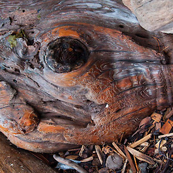 Tree Detail, Jones Island, San Juan Islands, Washington, US