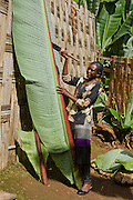 Africa, Ethiopia, Omo region, Chencha, Dorze village the fruitless Banana plant. These leaves are the major ingredient in the local bread