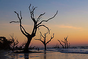 Sunrise over Boneyard Beach on Bulls Island, South Carolina. Bulls Island is a Sea Island 3 miles off the mainland and part of the Cape Romain National Wildlife Refuge.
