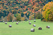 Hay bales in a farm field and fall maple leaf foliage along Cross Loop Road in Chelsea, Québec, Canada.  Photographed just north of the entrance to Gatineau Park.