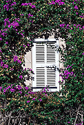 Bougainvillea vine frames shuttered window, Saint Tropez, France