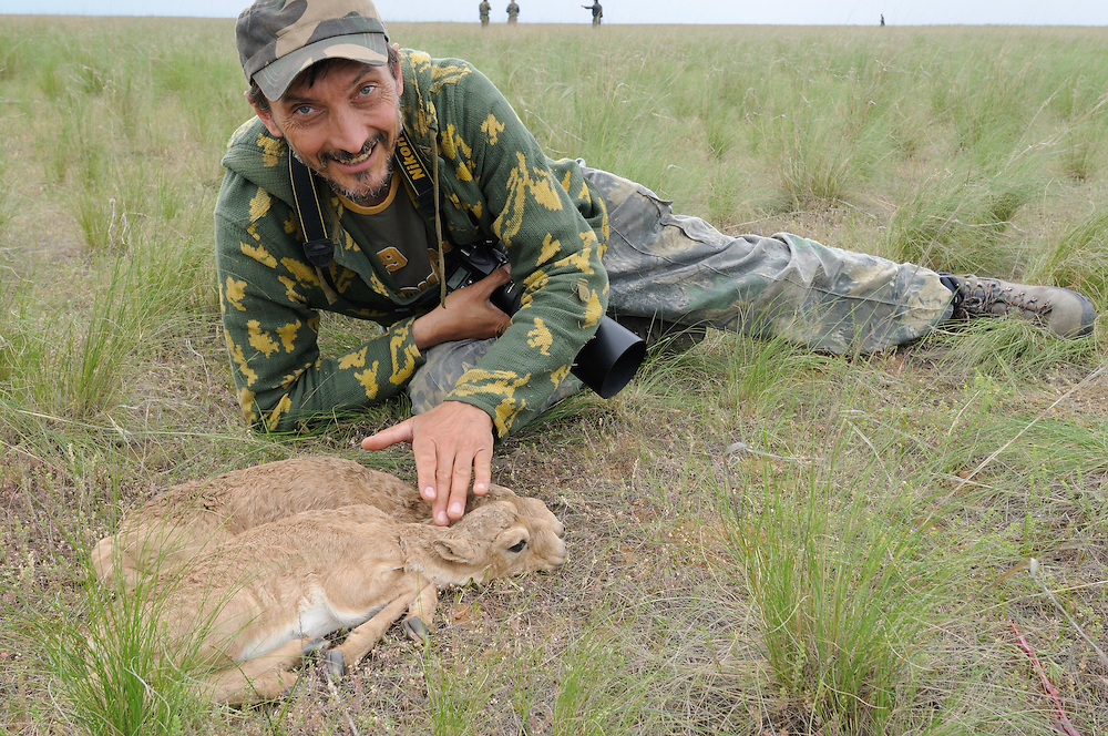 Mission: Saiga.Igor Shpilenok with saiga (Saiga tatarica) newborn calves in the steppe grasses of Cherniye Zemly (Black Earth) Nature Reserve, Kalmykia, Russia, May 2009.Saiga tatarica