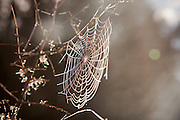 Spiderweb in morning light at Lake Matheson, New Zealand
