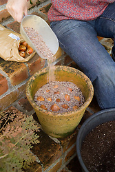 Planting tulip bulbs in a pot - covering with layer of grit