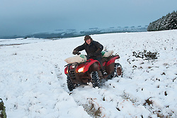 © Licensed to London News Pictures. 07/02/2014. Kevin Parry 50 is out early to feed his flock of Beulah Speckled Faced Sheep. 5cm of snow fell on high land in Mid Wales last night and early this morning. Epynt Range, Powys, Wales, UK. Photo credit : Graham M. Lawrence/LNP