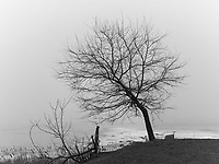 https://Duncan.co/river-road-tree