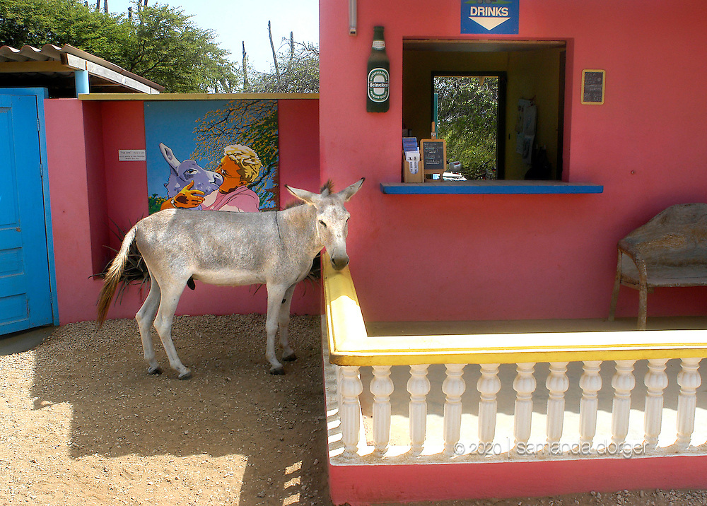 A donkey seeks out shade at the Donkey Sanctuary on the Caribbean island of Bonaire September 1, 2005. Donkeys, no longer used on the island as beasts of burden, now wander in search of food and often are struck by vehicles. The sanctuary protects over 200 donkeys.