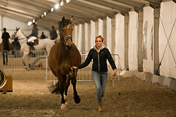Van der Putten Marieke, NED, Zingaro Apple<br /> Jumping Mechelen 2017<br /> © Sharon Vandeput<br /> 26/12/17