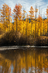"""""""Aspen Reflections 1"""" - Photograph of yellow aspen trees in the fall at a pond near Spooner Lake, Nevada."""