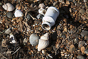 Marine pollution shown by plastic container on a beach next to shells