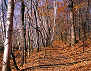 BB07037-03...INDIANA - Hardwood forest along the Cowles Bog Trail in Indiana Dunes National Lake Shore.