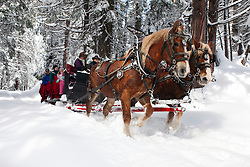 A team of two Belgian Draft Horses pulls a sleigh through the snow near Tenaya Lodge, Yosemite National Park, California, United States of America