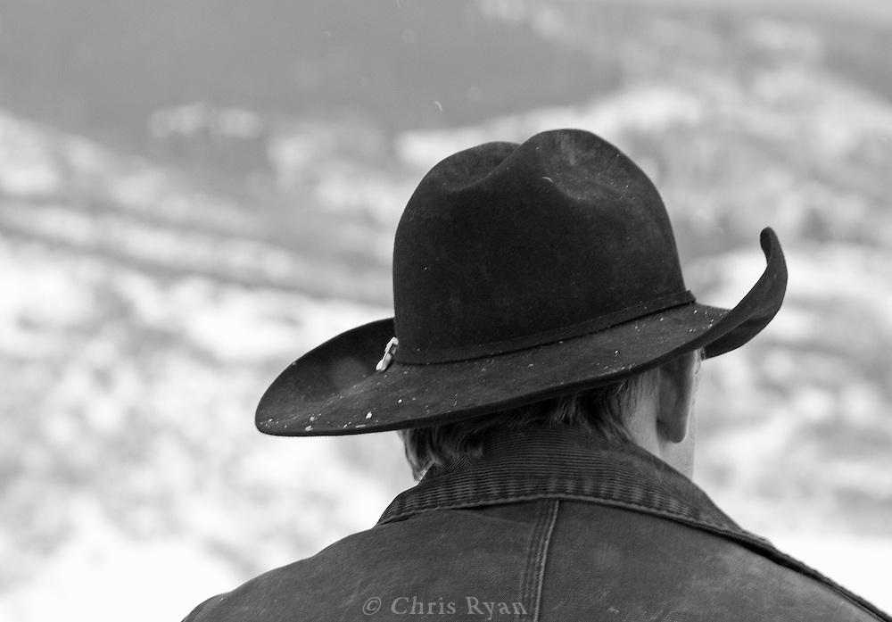 Cowboy, Yampa Valley, Colorado