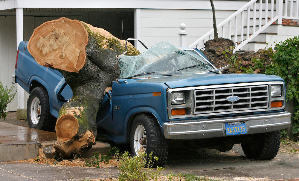 A large oak tree fell on a pick up truck that was parked in a driveway.