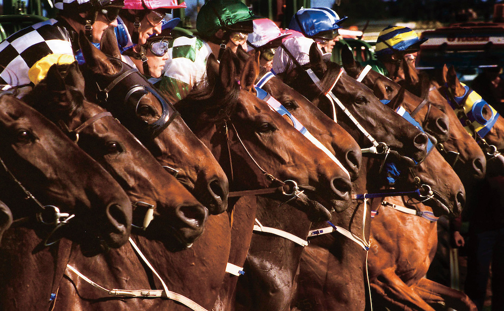 106 The Age of Racing: They jump as one ... The field breaks for the 1997 Caulfield Cup. And 2400metres later, Might And Power had not only won by 7.5 lengths, but set a record of two minutes 26.2 seconds. He was, said some, the most exciting stayer in the world, and his subsequent performances gave more credence to the claim. Among the wins that followed were the Melbourne Cup, also in 1997, and the Cox Plate, in 1998..Picture: Craig Sillitoe..fairfaxphotos.com melbourne photographers, commercial photographers, industrial photographers, corporate photographer, architectural photographers, This photograph can be used for non commercial uses with attribution. Credit: Craig Sillitoe Photography / http://www.csillitoe.com<br />